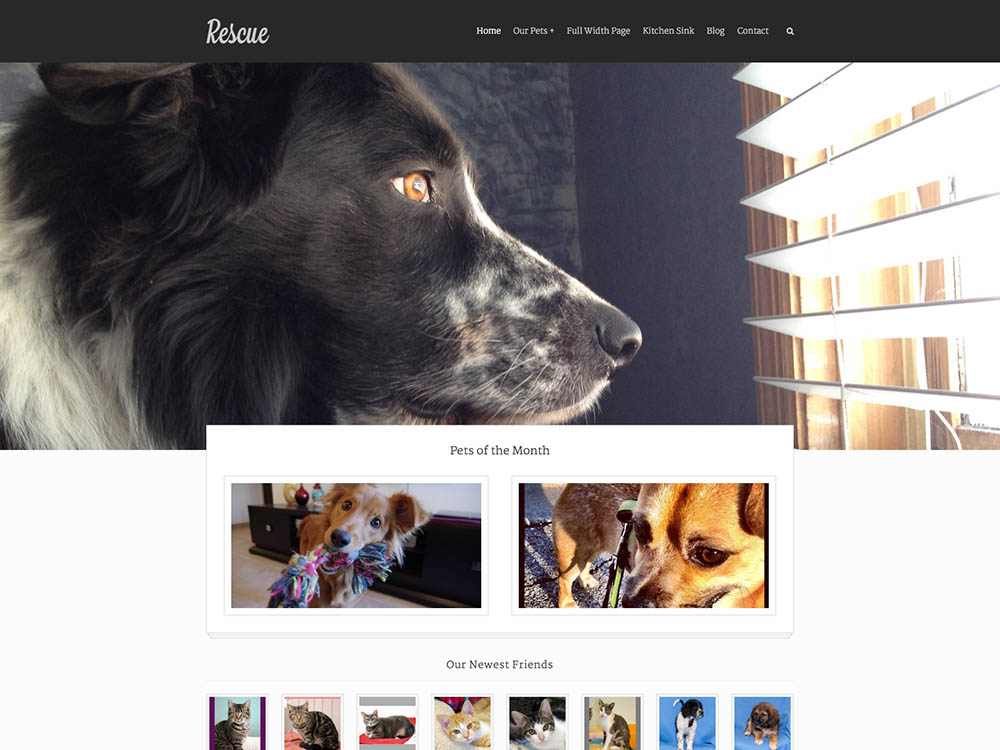 Rescue_An_Animal_Shelter_Theme_-_2014-10-22_18.17.14